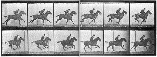 Muybridge_horse_gallop