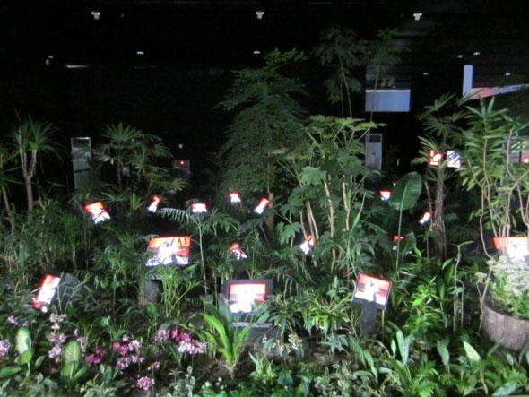 06-TV-Garden